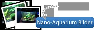 Nano-Aquarium Bilder