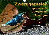 Zwerggarnelen - gepanzerte Juwelen im Aquarium (Wandkalender 2021 DIN A4 quer)
