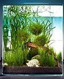 Dennerle Biosphere Cube 30 Liter - Pflanzenlandschaft für einen 30 Liter Nano Cube