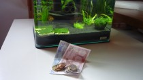 Aquarium-Kosten