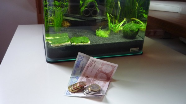 Laufende Aquarium Kosten – Was kostet ein Nano-Aquarium?