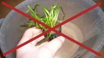 Aquarium-Pflanze mit Topf nicht in's Wasser
