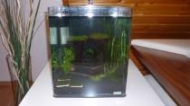 Aquarium-Wasser einfüllen