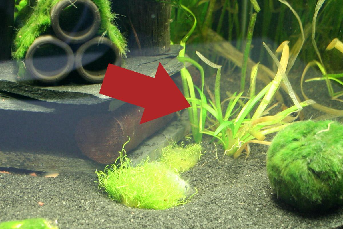 bio co2 anlage f r besseres pflanzenwachstum im aquarium. Black Bedroom Furniture Sets. Home Design Ideas