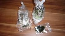 Aquariumpflanzen eingepackt