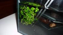 Aquariumpflanzen einsetzen