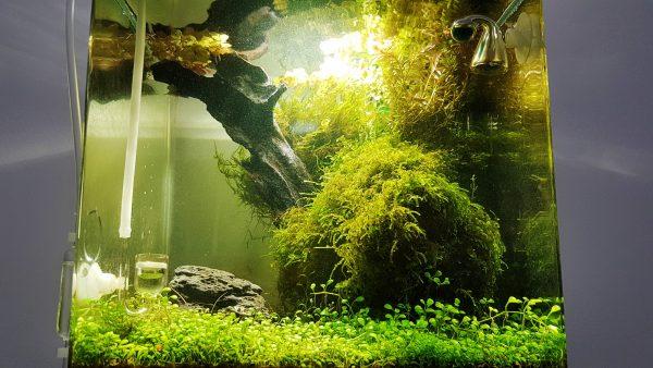 Aquascaping: Unterwasserlandschaft im Aquarium