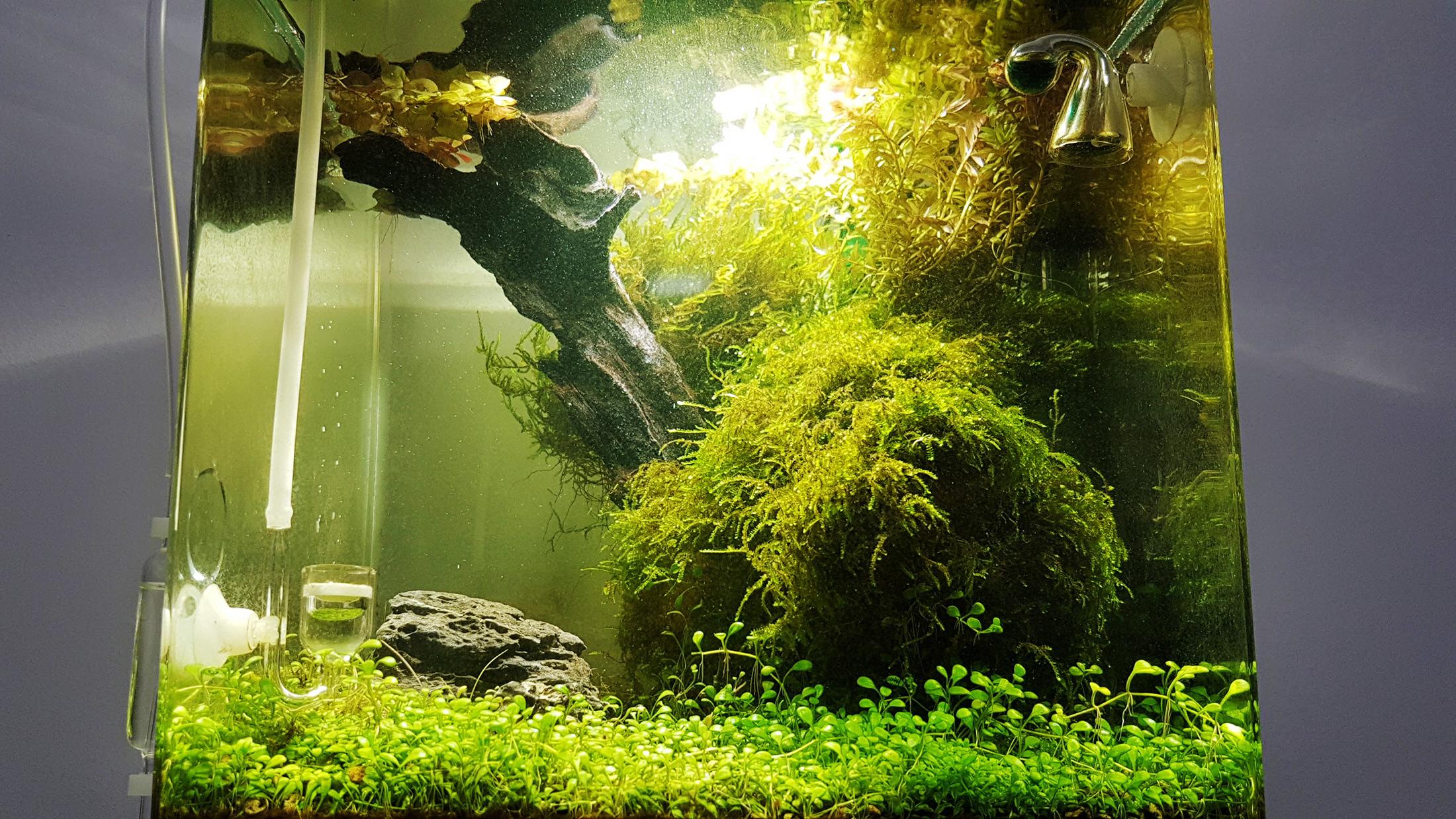Nano Aquarium Nano Aquaristik Tipps Zum Susswasseraquarium