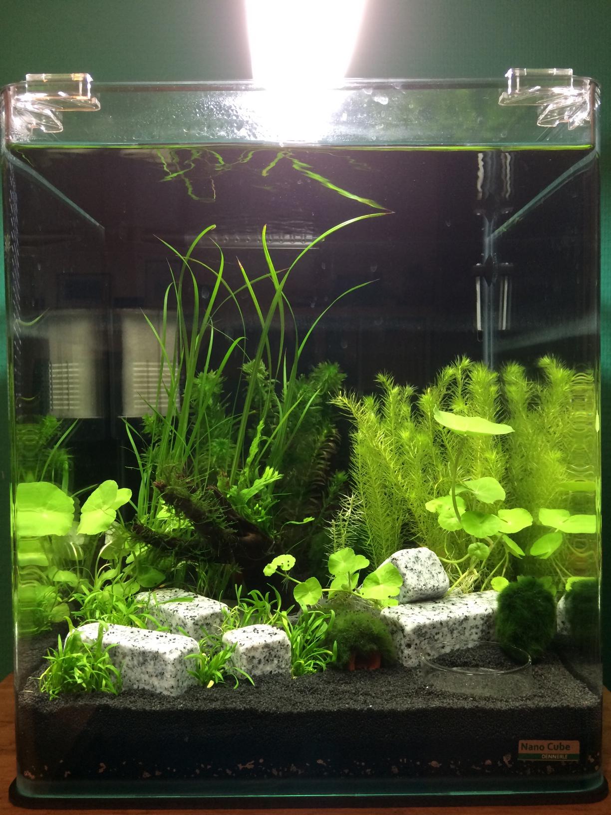 Nano aquarium einrichten dscf with nano aquarium einrichten interesting hierfr sollte man sich - Nano aquarium deko ...