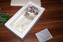 Garnelen in Styroporbox mit Heatpack