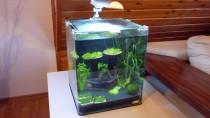 Nano-Aquarium eingerichtet