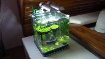 Nano-Aquarium komplett