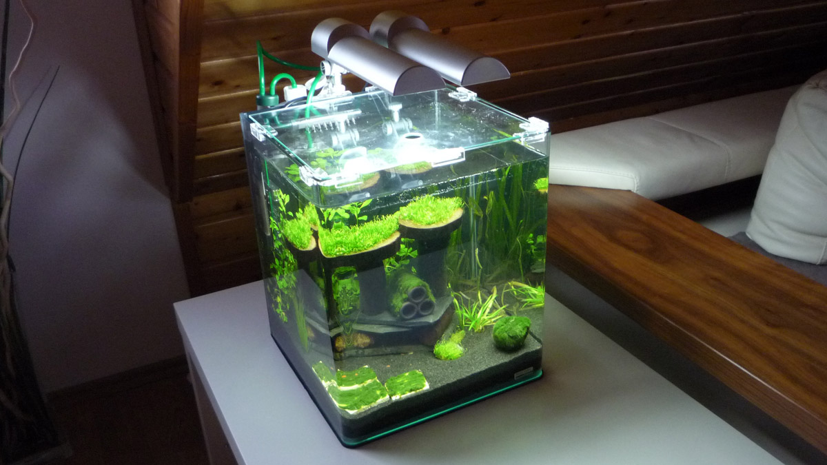 nano aquarium bilder nano aquarium fotos. Black Bedroom Furniture Sets. Home Design Ideas