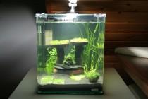 Nano-Aquarium Pilz-Duo