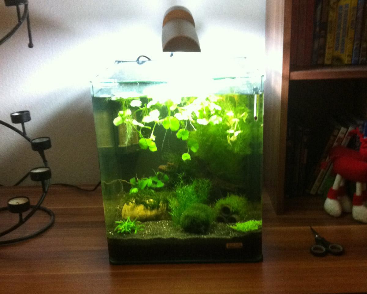 nano aquarium bilder nano aquarium fotos