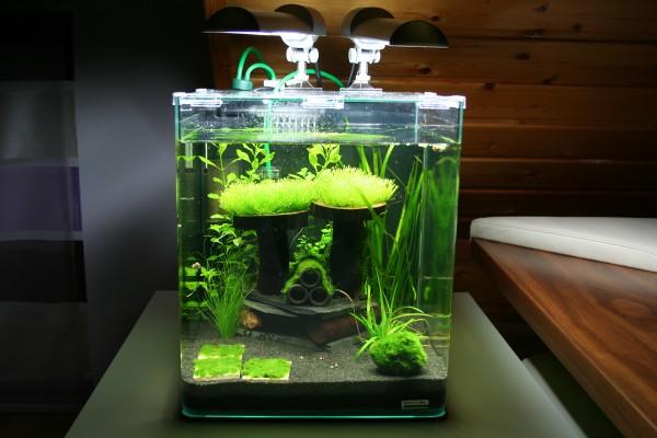 Nano-Aquarium mit Zwerggarnelen