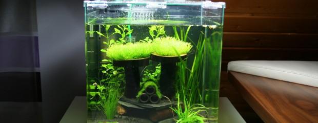 Video vom eingerichteten Dennerle Nano-Aquarium