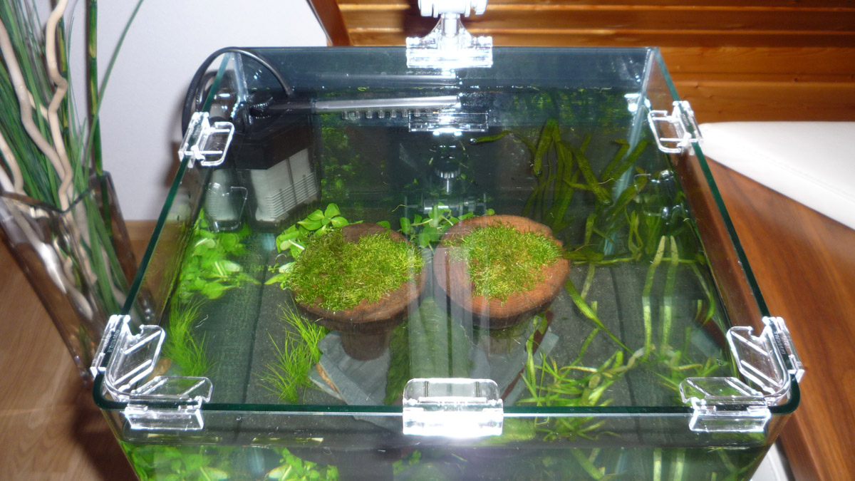 no maintenance fish tank nano nano fish for small