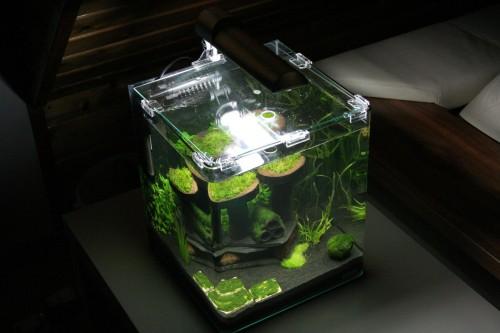 vorwort vorteile eines nano aquariums nachteile eines. Black Bedroom Furniture Sets. Home Design Ideas