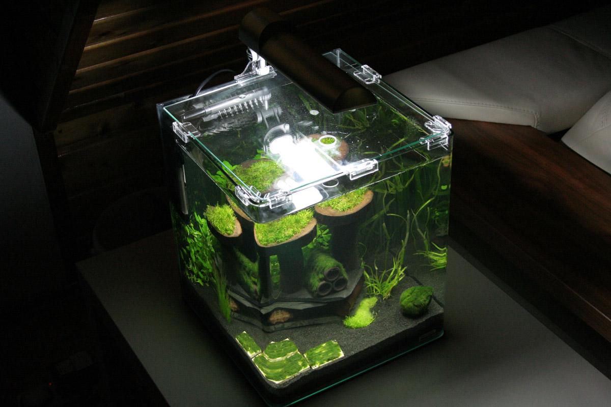 vorwort vorteile eines nano aquariums nachteile eines nano aquariums. Black Bedroom Furniture Sets. Home Design Ideas