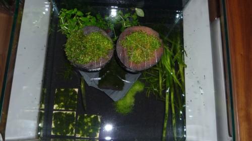 Nanoquarium Bepflanzung