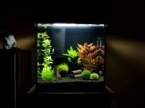 Tetra 30 Liter Aquarium