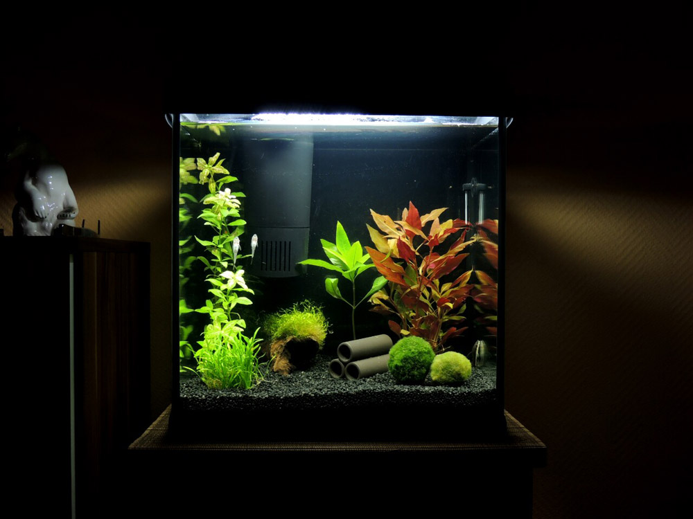 ik mijn auto rennen filter 30 liter aquarium fur fische. Black Bedroom Furniture Sets. Home Design Ideas