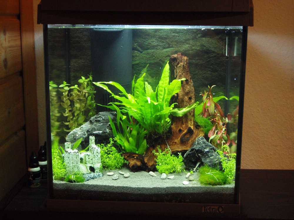 Tetra aquaart aquarium 20 30 und 60 liter komplett set for Tetra acquario