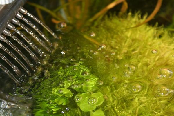 Aquariumfilter bringt Oberflächenbewegung