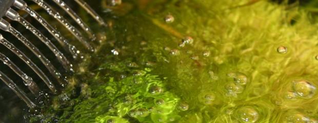 Sauerstoffpumpe im Nano-Aquarium – muss das sein?