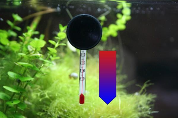Aquarium-Temperatur zu hoch – 10 Tipps zur Kühlung eines warmen Aquariums