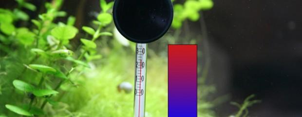 Aquarium-Temperatur hoch – 10 Tipps zur Kühlung eines warmen Aquariums