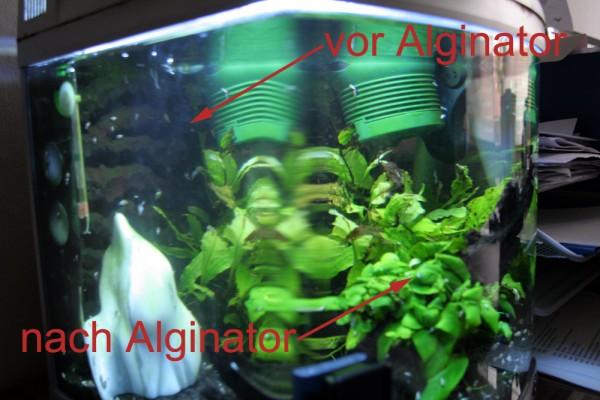 Alginator - Vergleich vor und nach Gebrauch