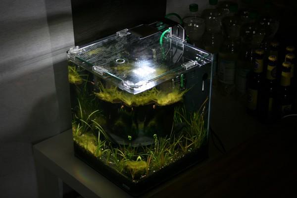 Aquarium LED-Beleuchtung