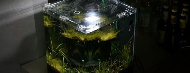 Dennerle Nano Power-LED 5.0 im Test: sparsam, hell und schick