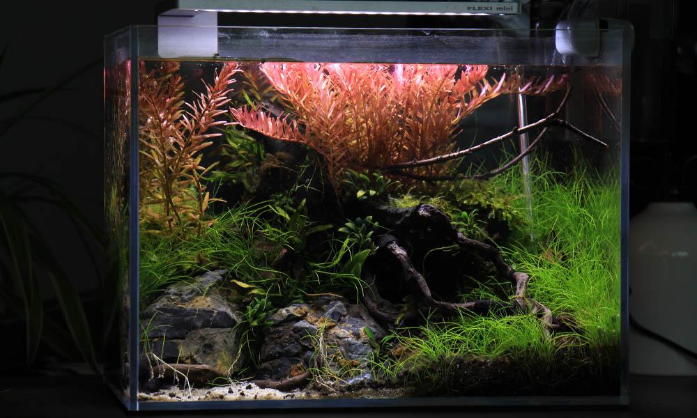 Nano Aquarium ➔ Dein einfacher Schritt in die Aquaristik! 🐠🦐