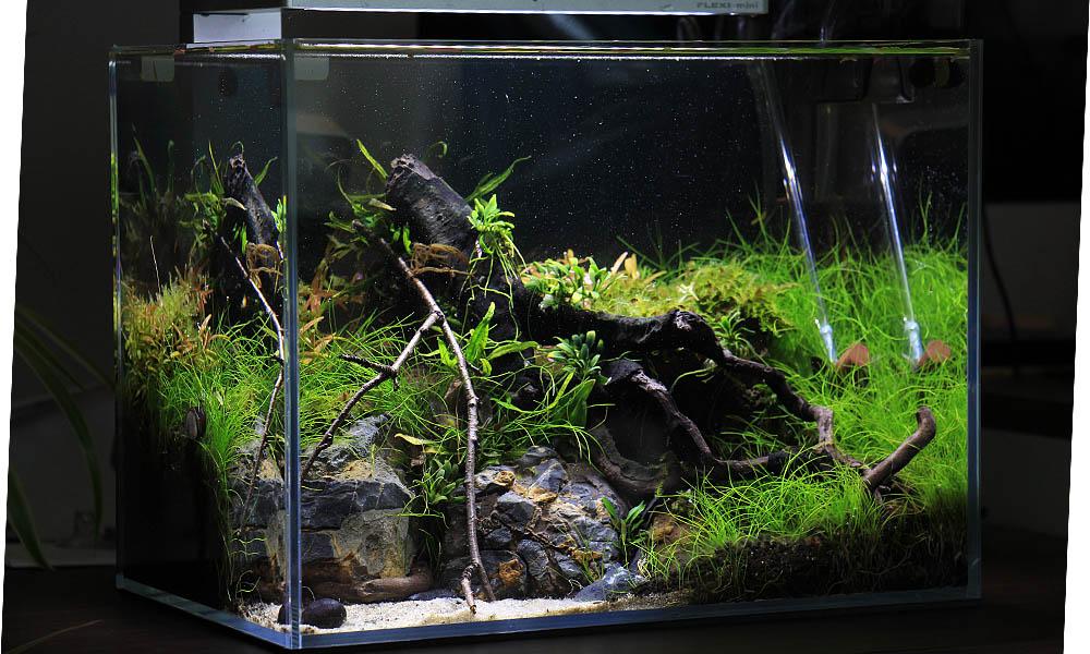 Nano-Aquarium ➔Dein einfacher Schritt in die Aquaristik!🐠🦐