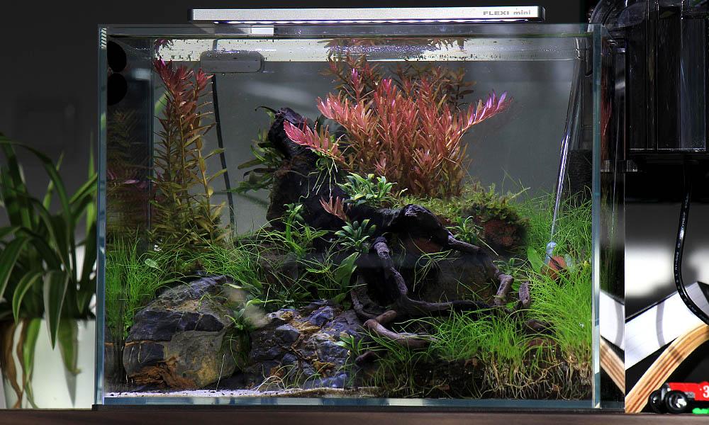 Nano Aquarium Dein Einfacher Schritt In Die Aquaristik