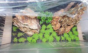 Dry-Start-Methode: so startest Du dein Aquarium effektiv und völlig algenfrei!