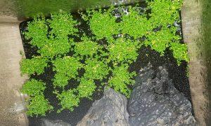 Pflanzen für die Dry-Start-Methode