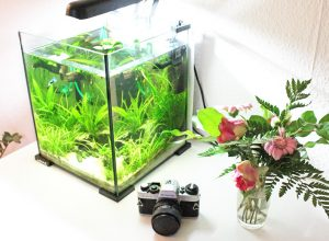 Aquael Shrimp Set im Test: Dein ideales Einsteigerset in die Nanoaquaristik!